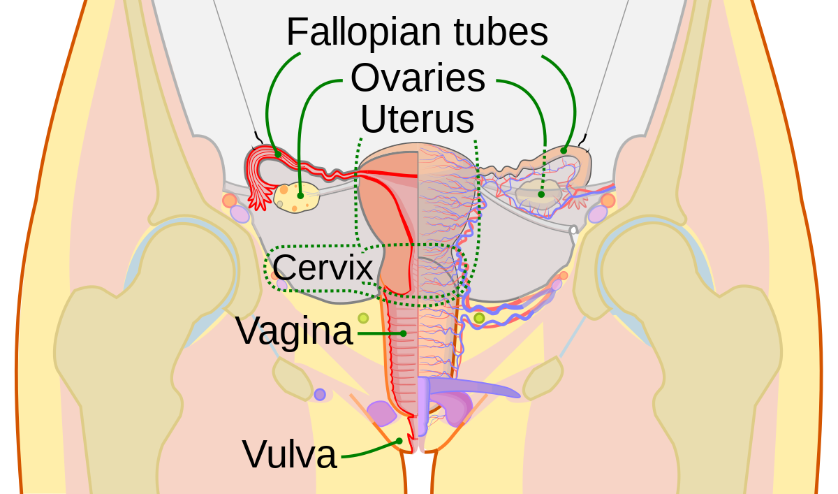 Fear of anal sex prevalence of anal seanal sex prostate photo 2